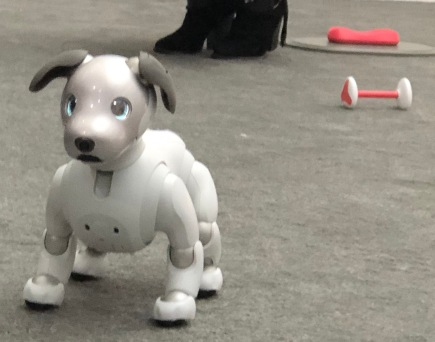 Robotics - Sony dog 2